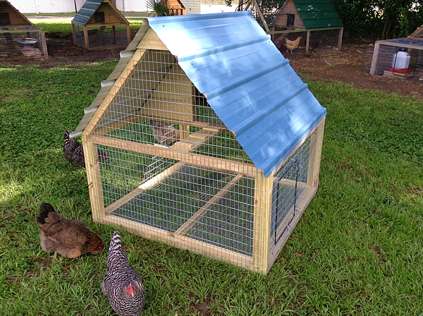 Chicken coops rabbit hutches aviaries for Chicken coop size for 6 chickens